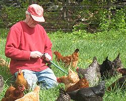 Farm Raised Laying Hens – Hudson Valley, NY Heather Ridge Farm