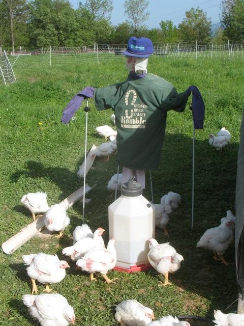 Chicken Order