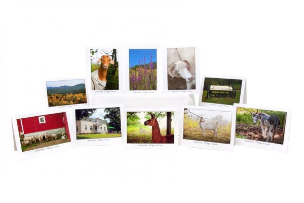Photo Note Cards – Pack of 5